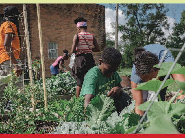 "Cover the book ""Freedom Farmers"" shows children in a community garden"